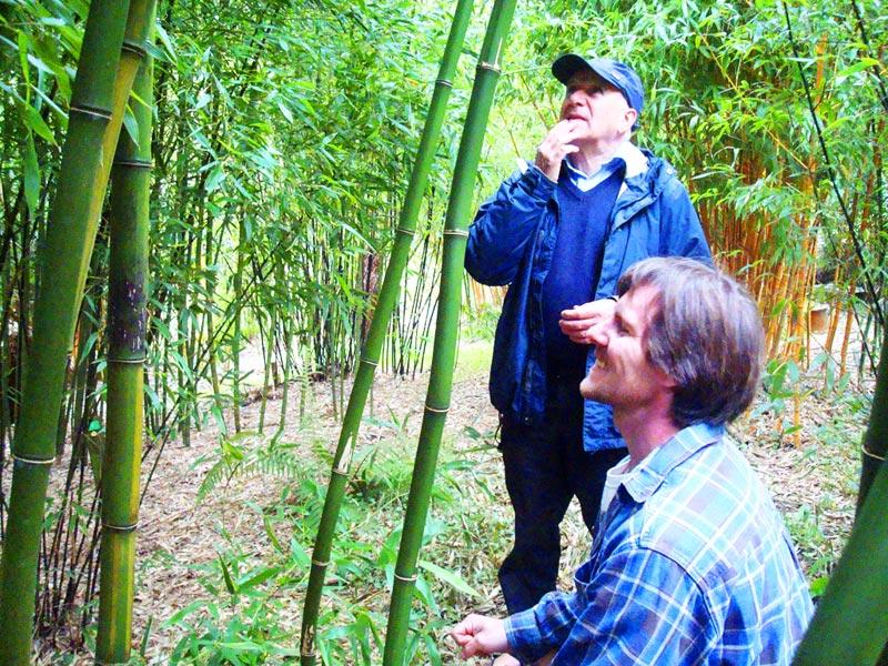 Bambusárium Troja — Praha